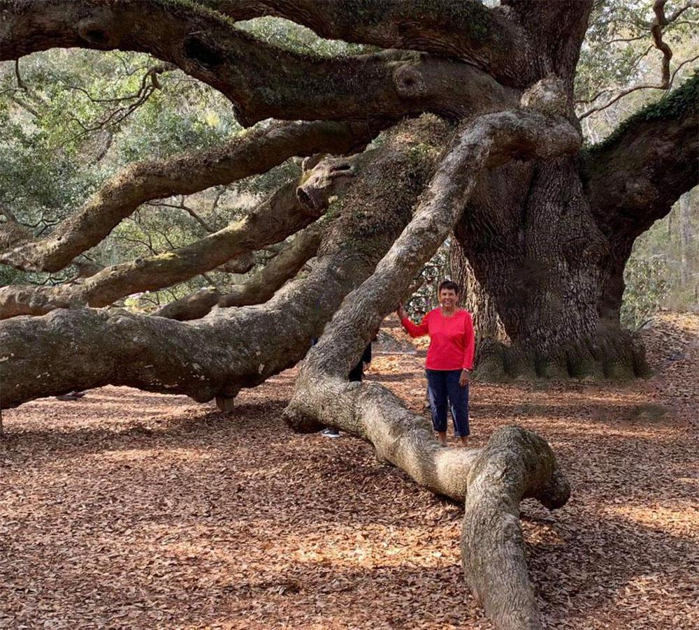 Judy tree